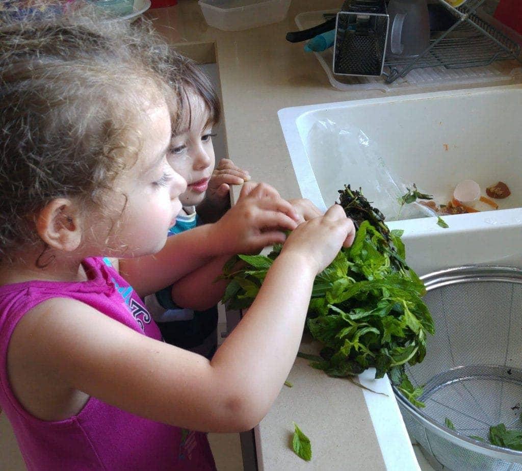 שיתוף הילדים בהכנת האוכל - שטיפה וקטיפת עלי נענע