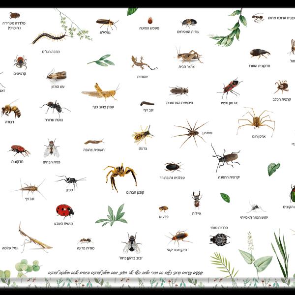 פלייסמט חרקים דו צדדי